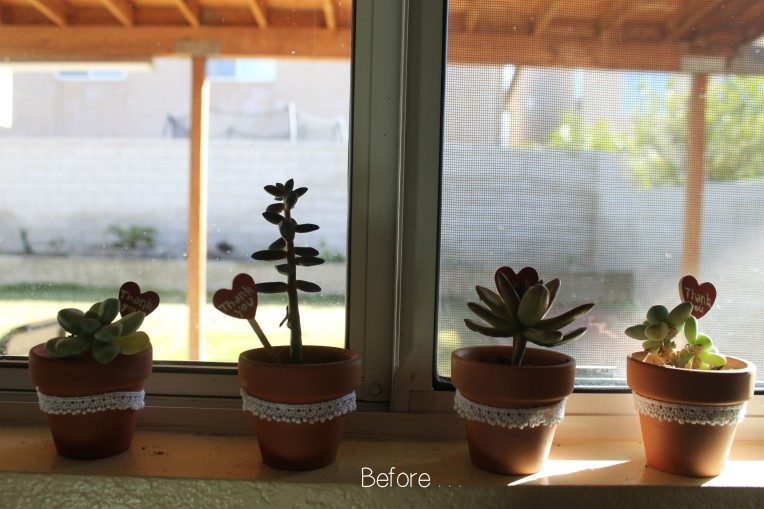 Before plants